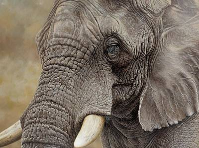 Painting - African Elephant by Alan M Hunt