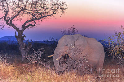 Photograph - African Elephant By Night by Benny Marty
