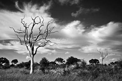 Photograph - African Landscape,black And White by Pal Teravagimov Photography