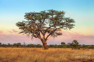 Photograph - African Savannah Wallpaper by Benny Marty