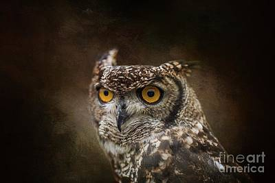 Photograph - African Spotted Eagle Owl by Eva Lechner