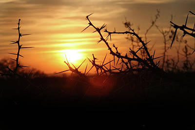 Photograph - African Sunset by Images Unlimited