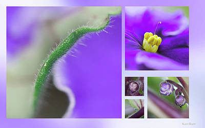 Photograph - African Violet by Karen Rispin