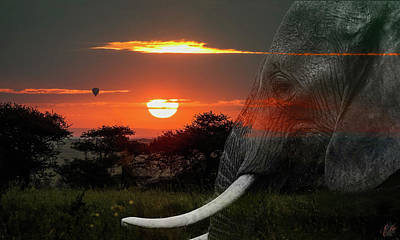 Animals Royalty-Free and Rights-Managed Images - Africas Dawn by Elie Wolf