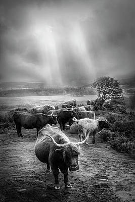 Photograph - After The Rain On The Mountain In Black And White by Debra and Dave Vanderlaan