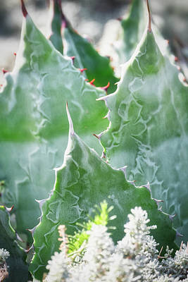 Photograph - Agave And Flowers  by Saija Lehtonen