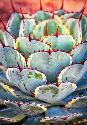 Photograph - Agave Heart Art  by Saija Lehtonen