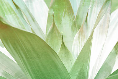 Kristian Gallagher Royalty-Free and Rights-Managed Images - Agave Cactus by Kristian Gallagher