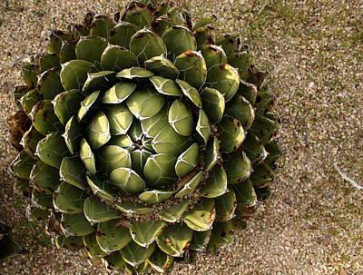 Photograph - Agave Plant by © Esther Moliné