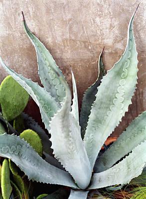 Photograph - Agave Plant by Brooke Slezak