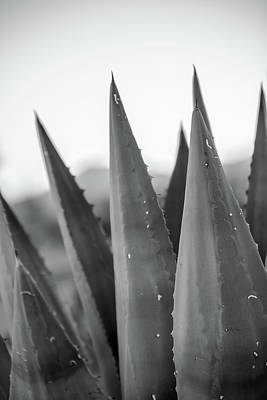 Photograph - Agave by SR Green
