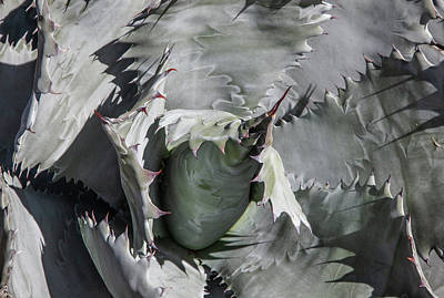 Photograph - Agave Universe by Lon Dittrick