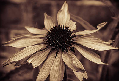 Photograph - Aged Beauty by Traci Asaurus
