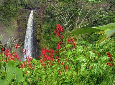 Photograph - Akaka In Red by Denise Bird