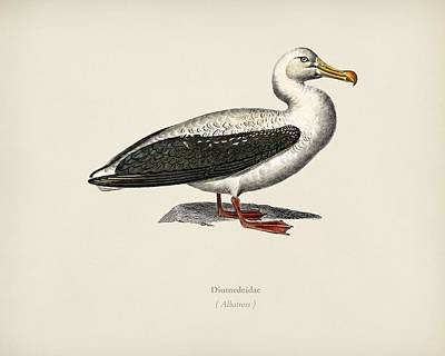 A White Christmas Cityscape - Albatross  Diomedeidae  illustrated by Charles Dessalines D Orbigny  1806-1876  3 by Celestial Images