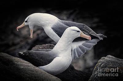 Photograph - Albatross by Patti Schulze
