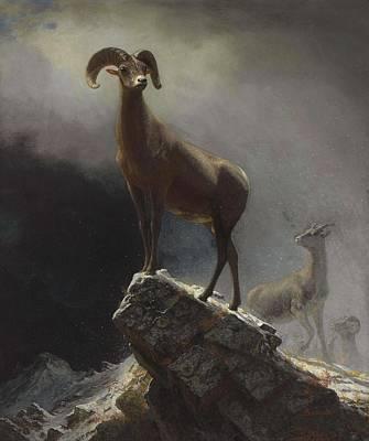 Superhero Ice Pops - Albert_Bierstadt_-_Rocky_Mountain_Sheep_or_Big_Horn,_Ovis,_Montana by Albert Bierstadt