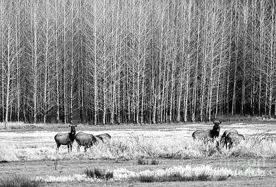 Photograph - Alder Meadows by Tim Moore