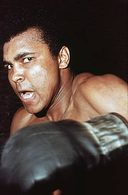 Photograph - Ali Glares At Opponant by Hulton Archive