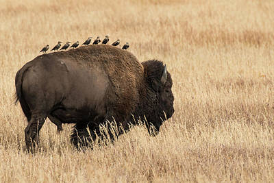 Photograph - All Aboard The Bison Express by Linda Shannon Morgan