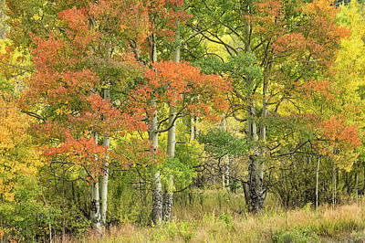 Photograph - All Autumn Colors by Denise Bush