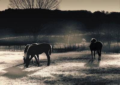 Moody Trees - All The Tired Horses In The Sun by Jeff Watts