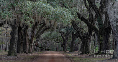 Photograph - Allee' Of Live Oaks - Lowcountry Southern Plantation by Dale Powell