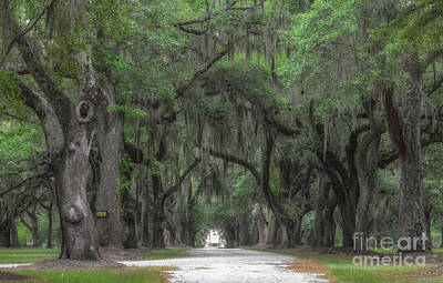 Photograph - Allee Of Oaks - Fenwick Hall Plantation by Dale Powell
