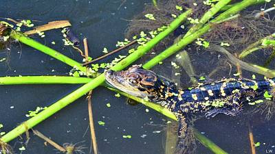 Photograph - Alligator Baby by Lisa Wooten
