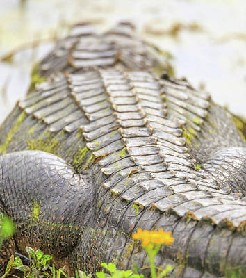 Photograph - Alligator Scales by Dan Sproul