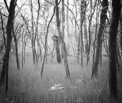 Wall Art - Photograph - Alluring Forest by Martin Belan
