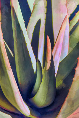 Photograph - Aloe Abstraction by Leda Robertson