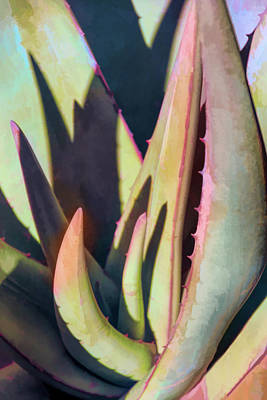 Photograph - Aloe Intrigue by Leda Robertson