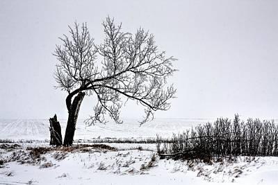 Photograph - Alone by David Matthews
