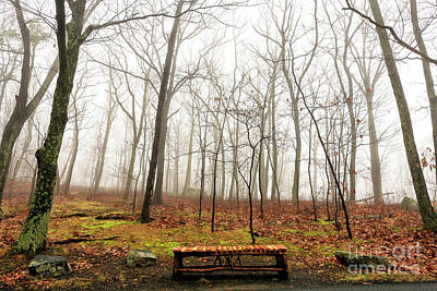 Photograph - Alone In The Woods At Mohonk Preserve by John Rizzuto