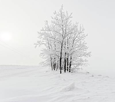 Photograph - Alone On The Prairie by Dan Jurak