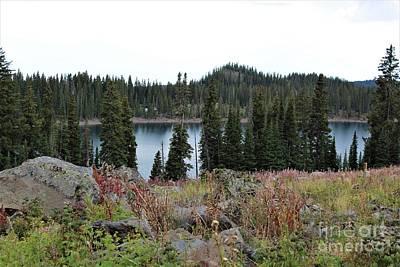 Purely Purple - Alpine Lake Atop Grand Mesa by Tammie J Jordan