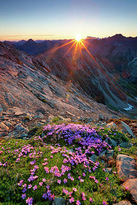 Photograph - Alpine Sunrise With Flowers In The by Wingmar