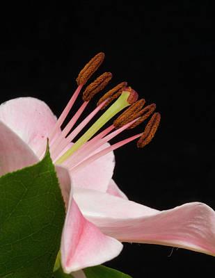 Photograph - Amaryllis Closeup by Storm Smith