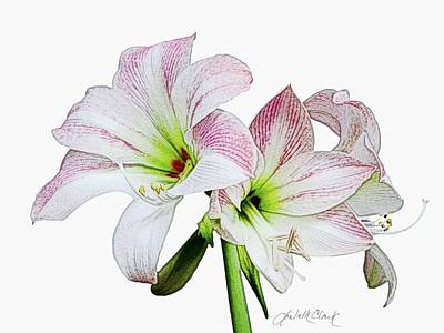 Painting - Amaryllis  by Loribeth Clark