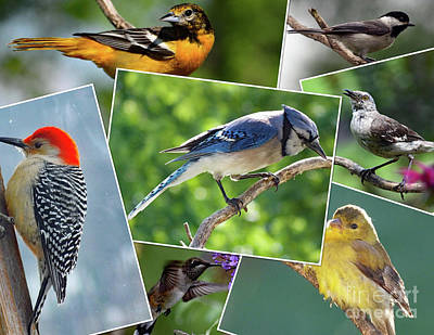 Farm Life Paintings Rob Moline - Amazing Colors of Nature - Bird Collage by Cindy Treger