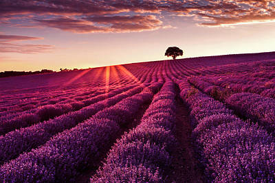 Photograph - Lavender Tree by Evgeni Dinev