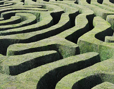 Photograph - Amazing Maze by Oversnap