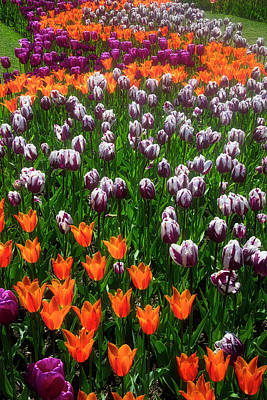 Photograph - Amazing Tulip Gardens by Garry Gay