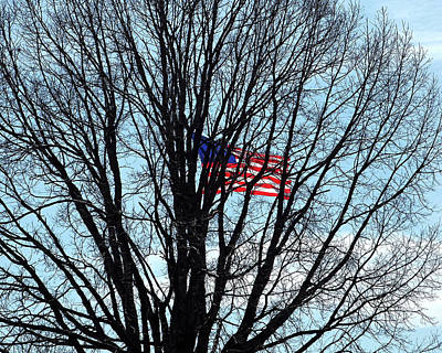 Photograph - American Flag Branching Out At Fort Mchenry by Bill Swartwout Photography