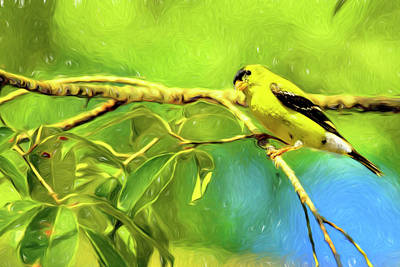 Photograph - American Goldfinch by Kay Brewer