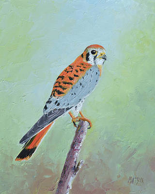 Painting - American Kestrel by Jan Matson