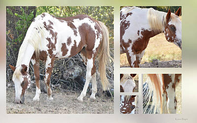 Photograph - American Paint Horse by Karen Rispin