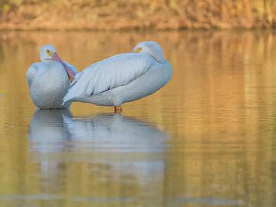 Photograph - American White Pelican 8679-110818-1cr by Tam Ryan