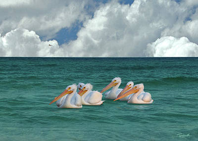 Digital Art - American White Pelicans Of Florida by Spadecaller